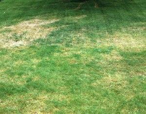 estrago causado pelas minhocas brancas (foto: vertdure.com)